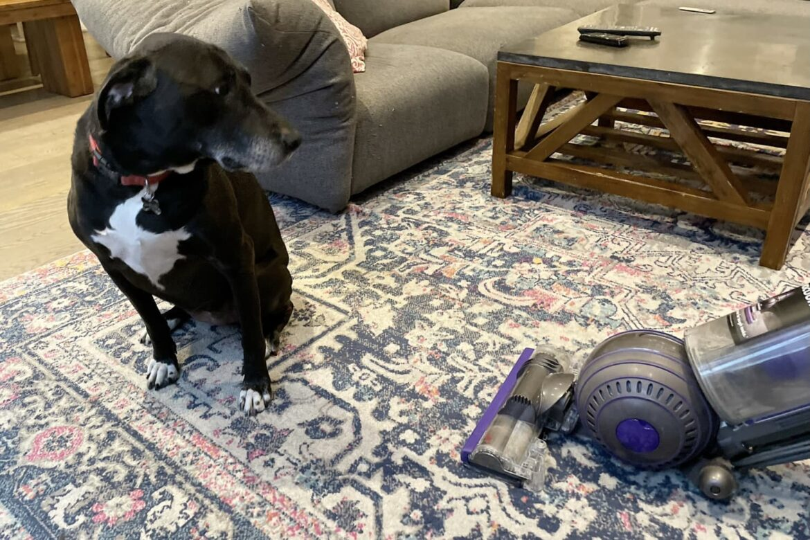 This Is the Only Vacuum That Can Stand Up to My Three Pets and Numerous Kitchen Messes (Bonus: It's $100 Off!)