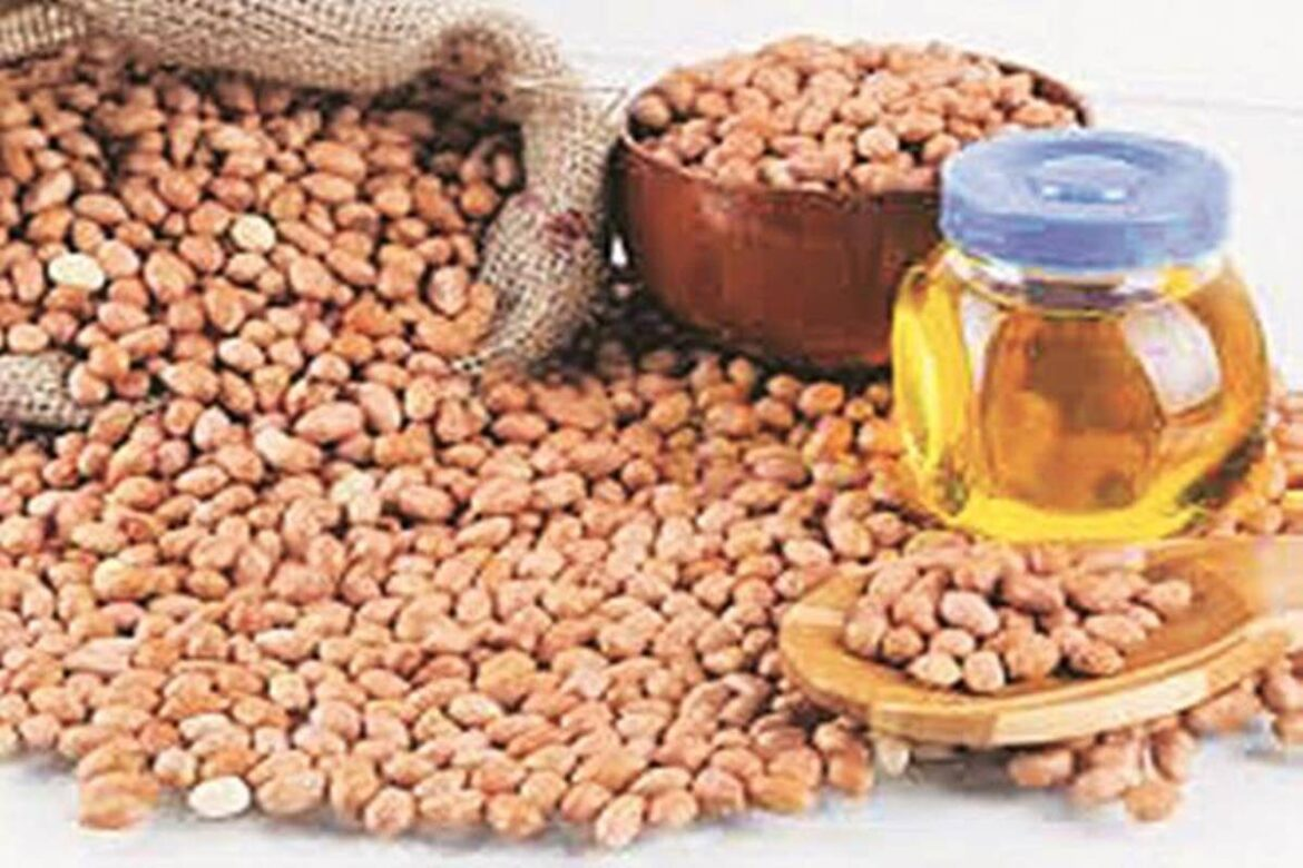 Gujarat to see bumper crops of groundnut and sesame this summer