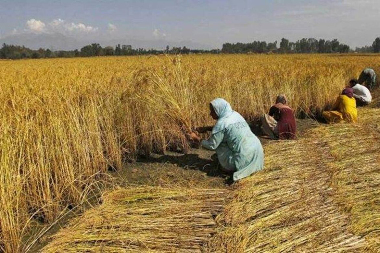 PM-Kisan: Rs 20,000 crore transferred to farmers' accounts