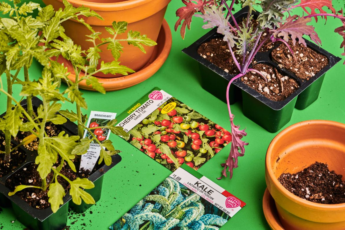 I Grow More than a Dozen Types of Vegetables on My Tiny Patio — These Are My Best Tips