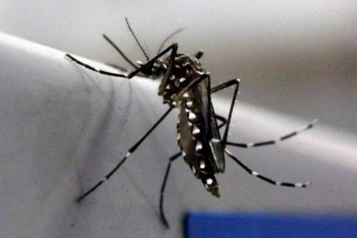 Kerala reports first case of Zika virus in 2021: Know what's Zika Virus, Symptoms, Prevention and Treatment