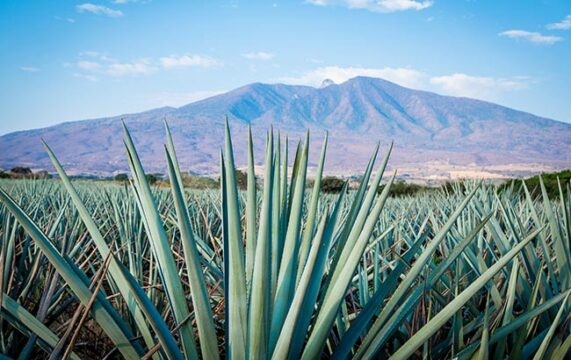 The world's best-selling Tequila brands